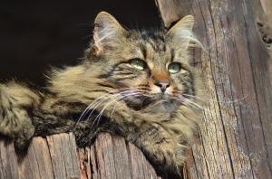 gato granja