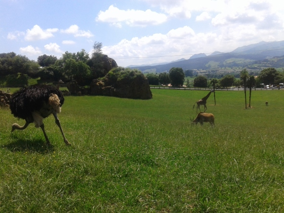 avestruz eland jirafa
