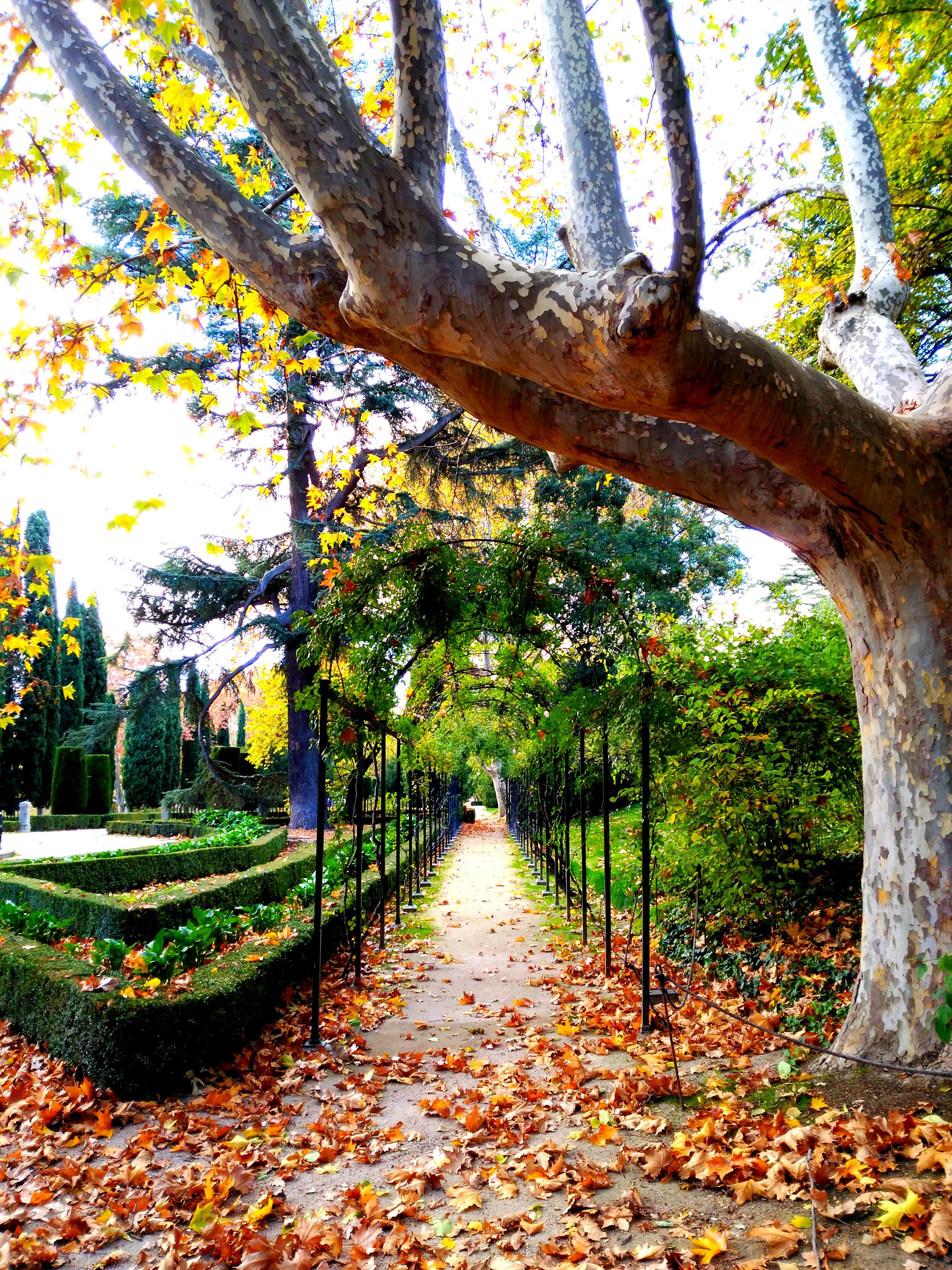 Planes fin de semana madrid y de repente papis for Jardin historico el capricho paseo alameda de osuna 25